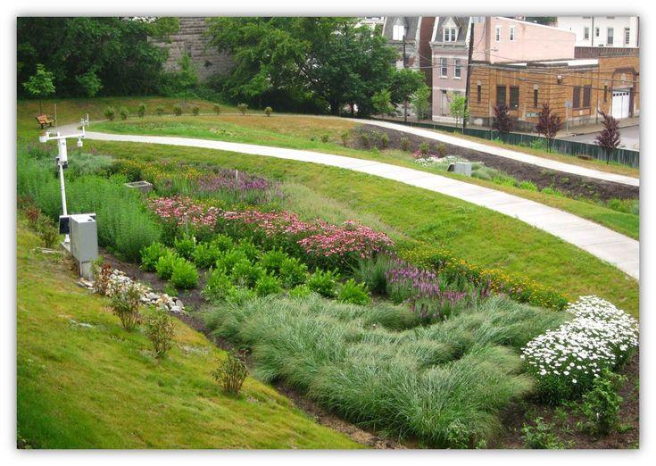 Best 25 rain garden ideas on pinterest down spout for Wadi in tuin