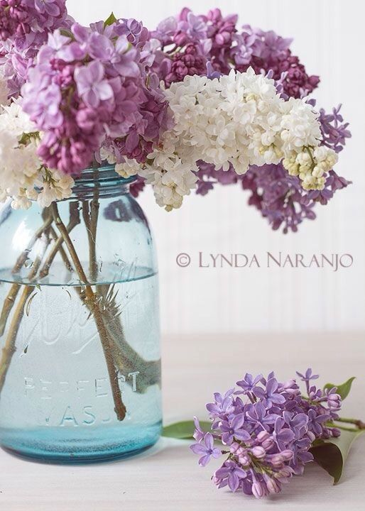 1st choice for centerpiece: a bunch of lilacs placed in a mason jar...   (My dh used to bring me fresh lilacs from his yard when we were dating - one of many reasons why I love lilacs)