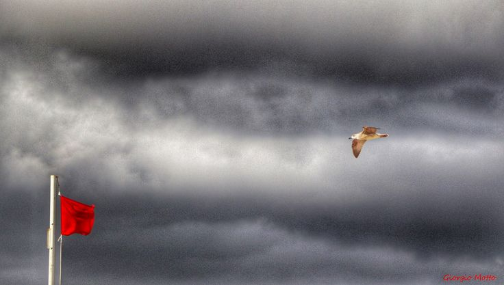 Seagull free