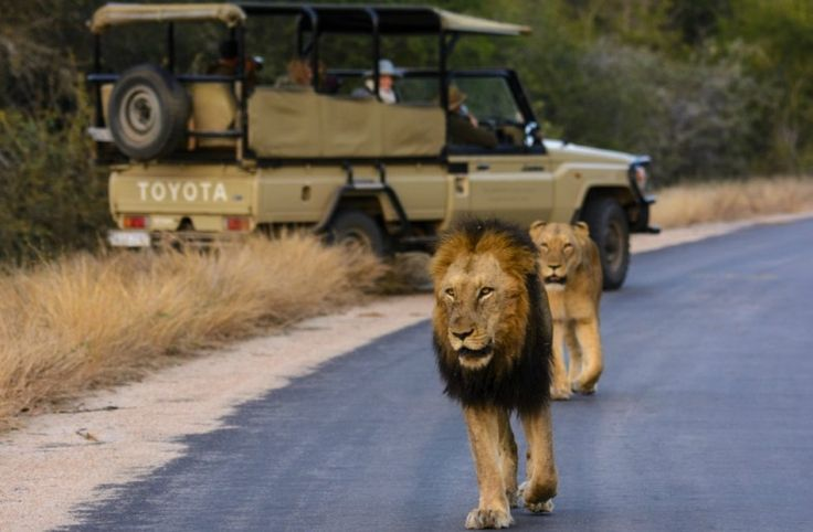 10-day bespoke South Africa experience from €3,225 per person. Relax with your family while we take care of all the logistics. The best of safari + coastal retreats galore: Get an instant quote or contact us: