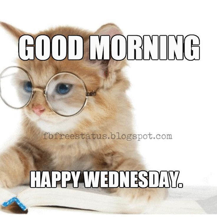 Nerdy Good Morning Meme : Best happy wednesday quotes images on pinterest