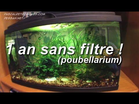 Tuto 2 : aquarium sans filtre 1 an plus tard (poubellarium d'intérieur)