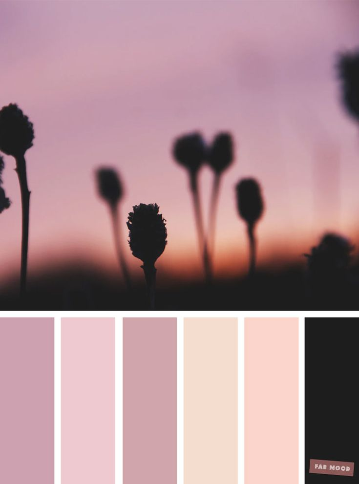 Blush tones : Pretty blush +black + mauve color scheme