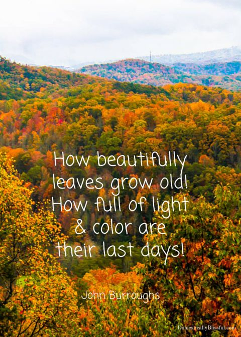 25+ best Fall Quotes on Pinterest  October fall quotes, Fall time quotes and...