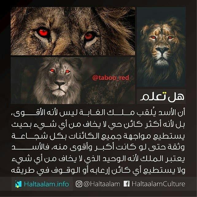 هل تعلم ゚ ゚ Cover Photo Quotes Arabic Funny Cool Words