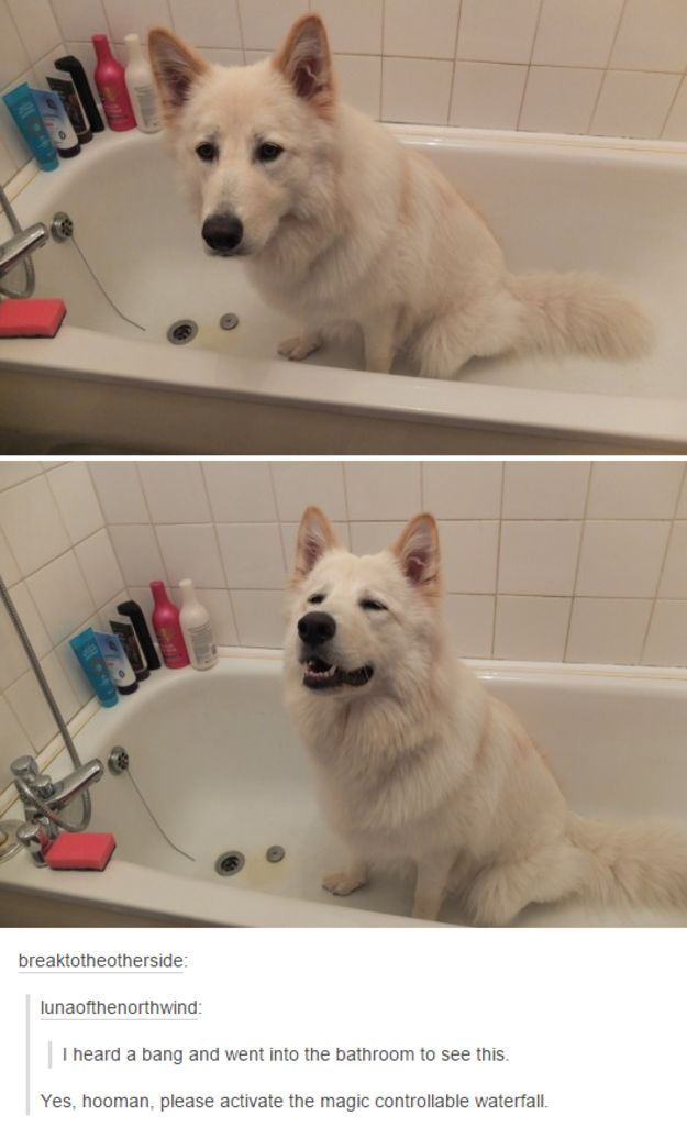 On magic: | 23 Tumblr Posts About Dogs That You Won't Get Through Without Smiling