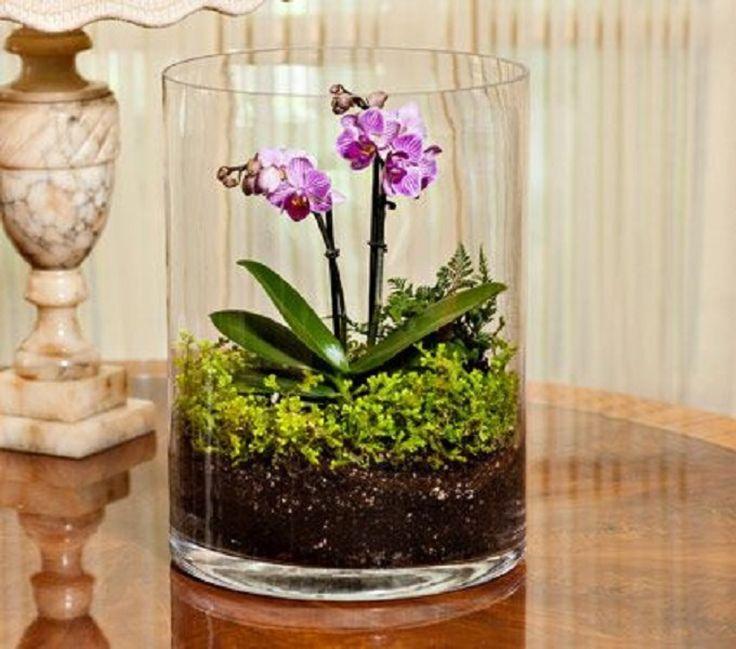 M s de 25 ideas incre bles sobre macetas para orquideas en - Maceta para orquidea ...