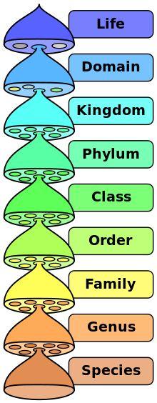 Taxonomy (biology) - Wikipedia, the free encyclopedia