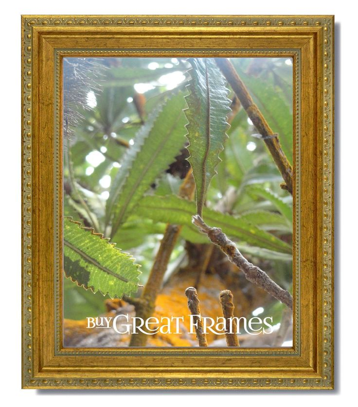 Amazon.com - One 16x20 Ornate Heritage Gold Picture Frame and Clear Glass -