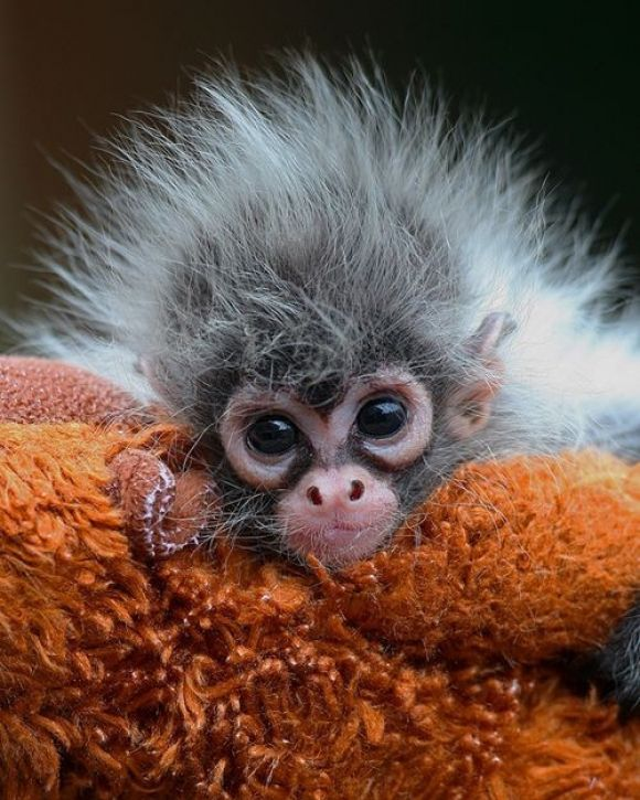 look at this adorable creature!! This bayyyybe looks like Albert Einstein on a bad hair day! NO OFFENSE! I Love this
