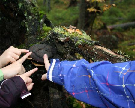 Luokasta luontoon -materiaali