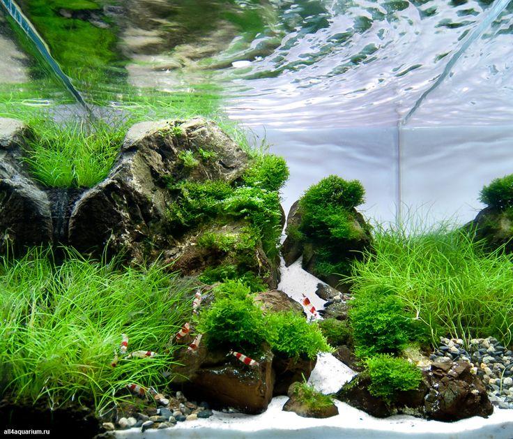 19 best Shrimp tank images on Pinterest Aquarium ideas