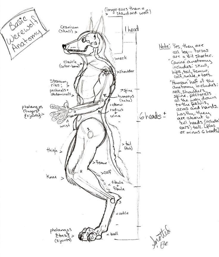 Großzügig Wolf Anatomie Diagramm Bilder - Menschliche Anatomie ...