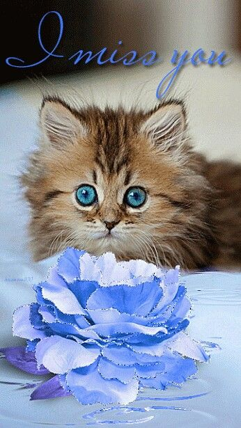 """811 best """"Cat Quotes/Sayings/Videos"""" images on Pinterest ..."""