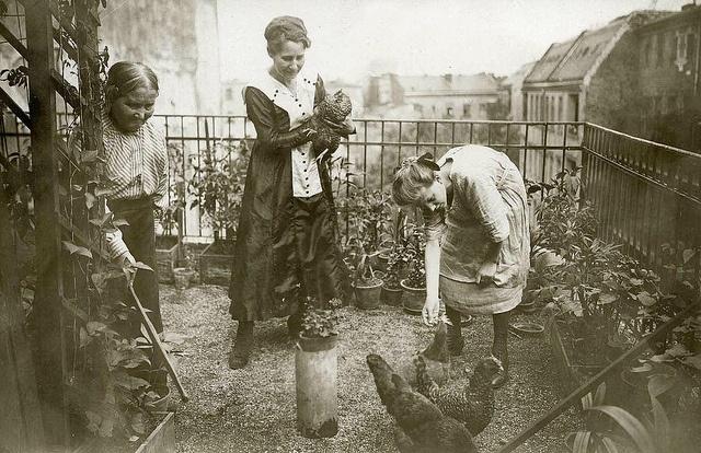 Berlin, Hühnerhaltung auf dem Balkon, um 1916.