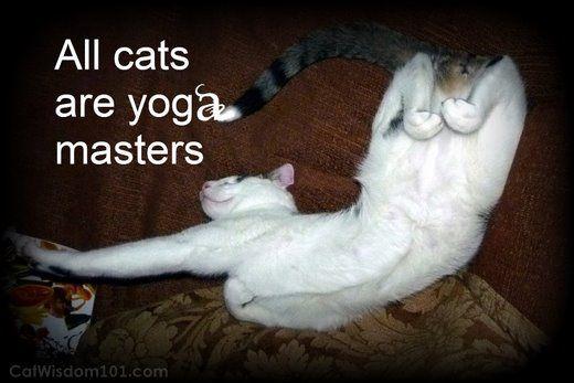 Cat Yoga Puns Metaverse Ico Online Transparency