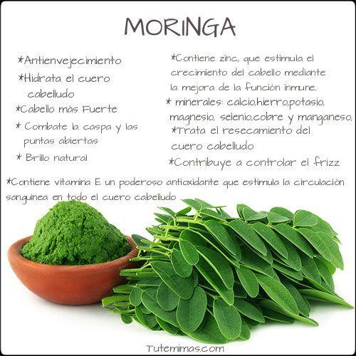 La #Moringa es uno de los principales ingredientes que contiene la línea #India. Queremos que la conozcáis más de cerca y que sepáis todas sus propiedades y lo que esta puede hacer por nuestro cabello. Para empezar la Moringa posee aproximadamente 46 antioxidantes y es una de las fuentes más poderosas de la naturaleza...¿No está mal, verdad? ¿Quieres ver todos los productos que entre sus ingredientes incluyen esta poderosa herramienta de la naturaleza? Haz click aquí