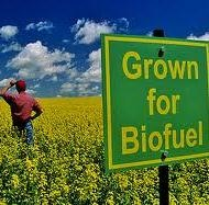 Biofuels and climate: benefit?