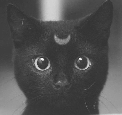 cute little witchy kitty!