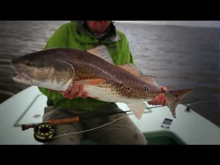 1000 images about inshore saltwater fishing pictures on for Community saltwater fish