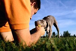 tips (and rules) for playing tugs {see also http://pets.webmd.com/dogs/teaching-your-dog-to-play-tug-of-war}