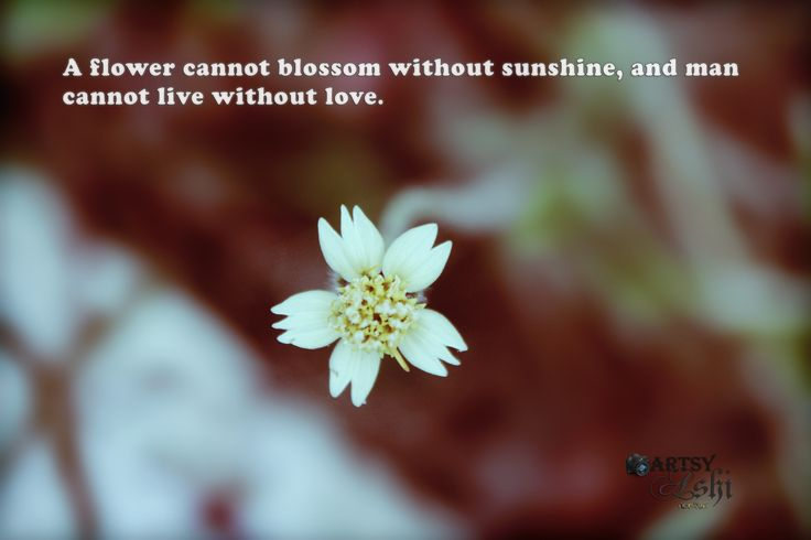 A flower cannot blossom without sunshine and a man cannot live without love