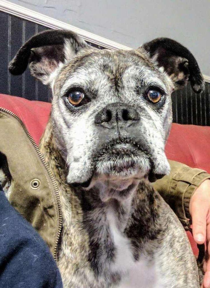 Senior Dog 6 Steps Toward Healthy Hygiene Old Dogs Dogs Dog Ages