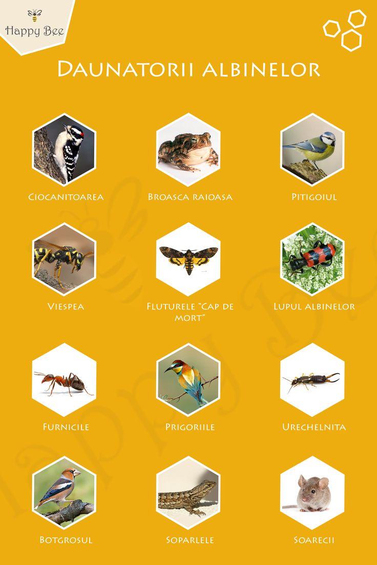 Daunatorii albinelor www.happybee.ro