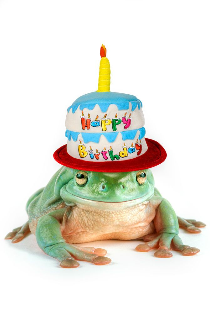 Awesome Humorous Frog With A Big Smile Wearing A Happy Birthday Cake Hat Funny Birthday Cards Online Aboleapandamsfinfo