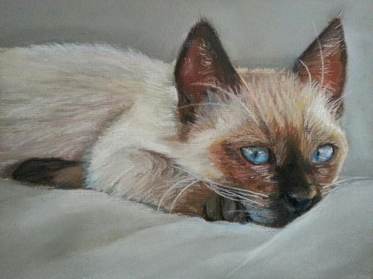 Siamese kitty