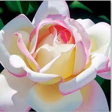 Resultado de imagen para pinturas oleos flores