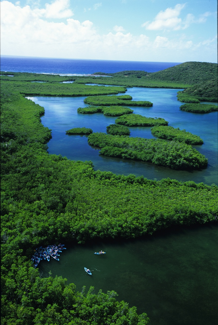 St Thomas Map Virgin Islands%0A Mangrove Lagoon Wildlife Sanctuary  u     Marine Reserve  St Thomas  Virgin  Islands  Kayak