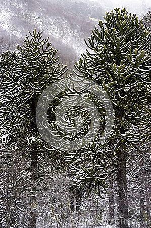 Árboles Nativos - Descarga De Over 34 Millones de fotos de alta calidad e imágenes Vectores% ee%. Inscríbete GRATIS hoy. Imagen: 26678633