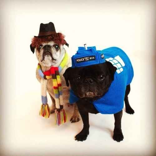 Doctor who Pugs. | 26 Costumes That Prove Pugs Always Win At Halloween