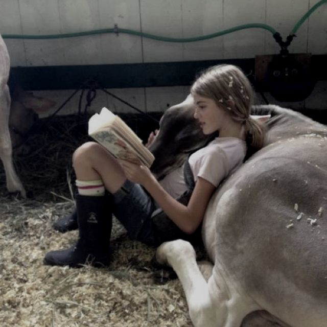 Reading, Cow and Horses on Pinterest