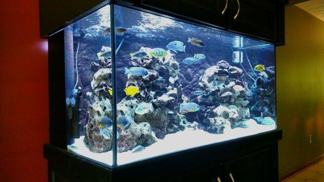 120 gallon all male aquarium