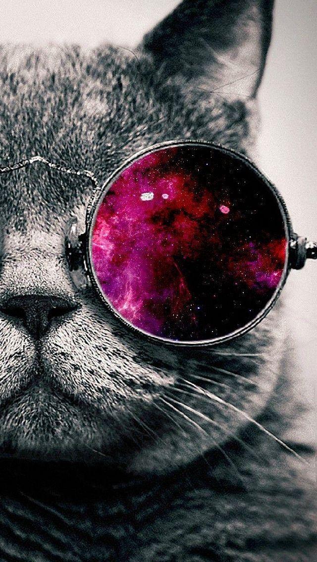 #Cat Que espera nuestro amigo gato , si tiene el universo en sus ojos?