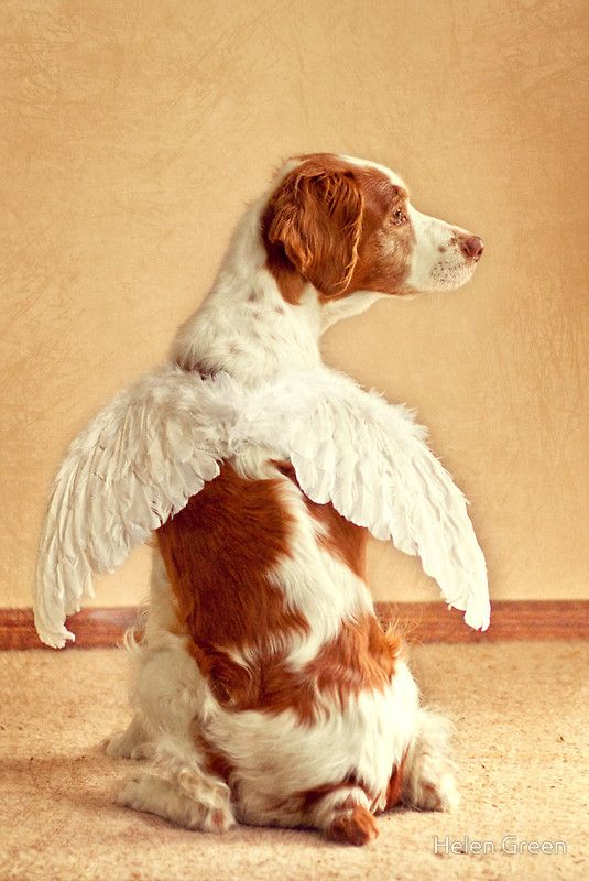 Original pinned said: Angels among us..I love my cooper and Ryder!!