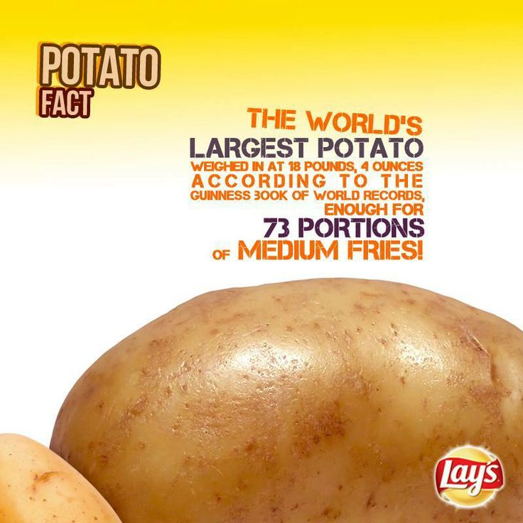 The worlds largest potato!