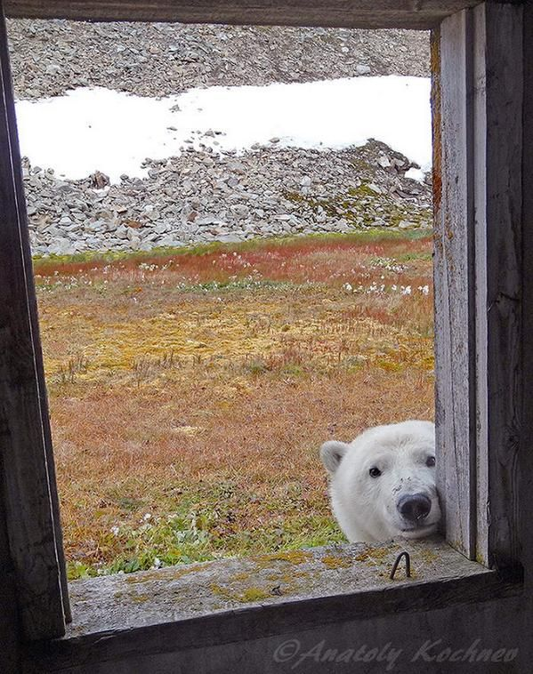 """""""Oh, hello."""" . . . . Looking out the window at somebody looking in."""