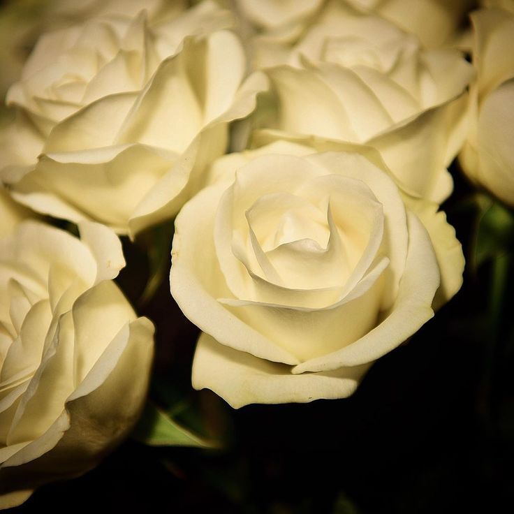 Just loving the white roses……….. #abouttownp…