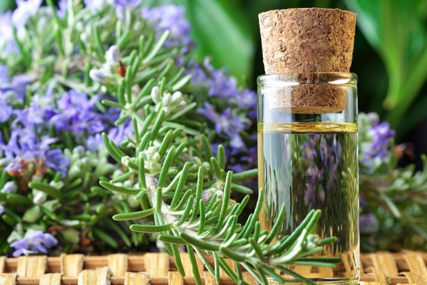 Το βότανο που ενισχύει τις νοητικές ικανότητες και βελτιώνει τη μνήμη κατά 75%