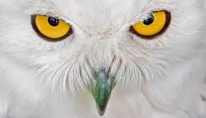 Resultado de imagen para imagenes asombrosas de animales