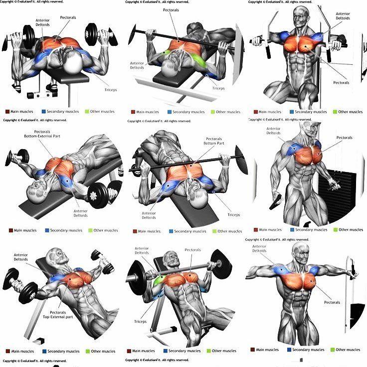 комплекс упражнений на все группы мышц фото нас