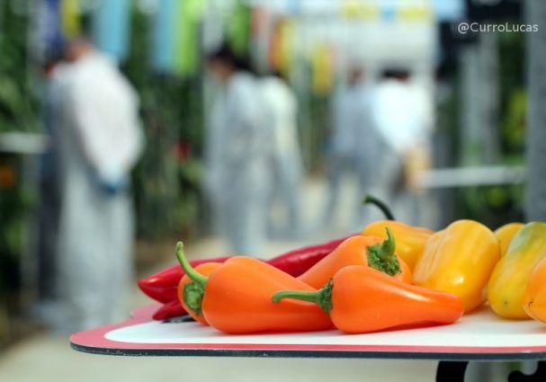 Cuatro grandes tendencias actuales en el sector alimentario que son a la vez oportunidad y amenaza, según David del Pino consultor en marketing alimentario, son...