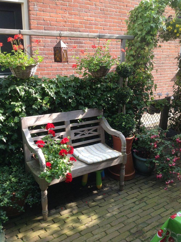 Nieuwe aanwinst in mijn kleine tuin: buxusbol.