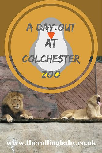 colchester zoo dissertation