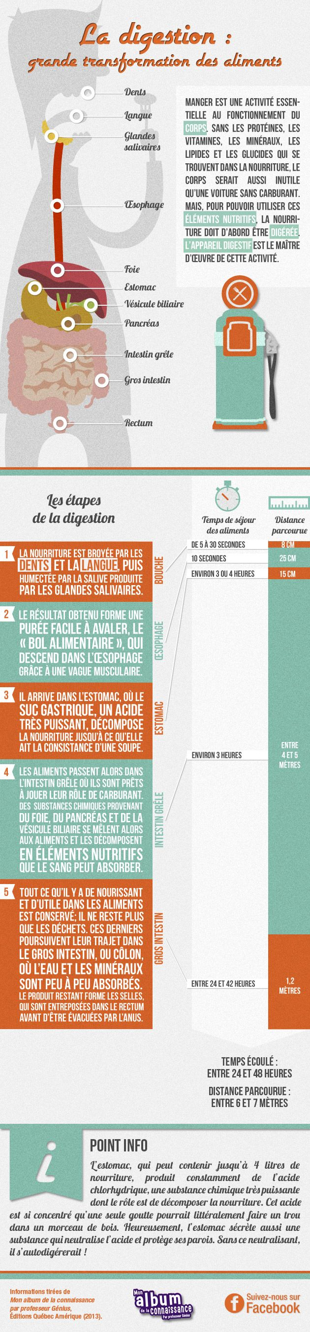 La digestion : grande transformation des aliments
