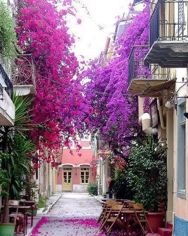 Flower Covered Street in Nafplion, Peloponnese