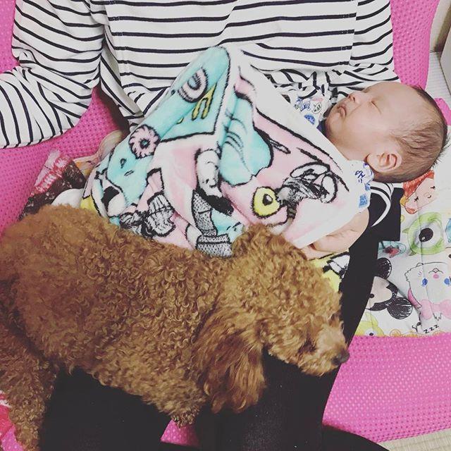 👩🏻👶🏻🐶 いつかの夜の光景。撮影:みんちょる . 毎日べったりな息子と愛犬。 癒されるけど重いし身動き取れない笑 . あたしのワガママで韓国から来てくれたあんず。 今は息子が寝てる時間しか遊べずで申し訳ない。 もっともっと遊んであげたい。。。 . . #0225 #baby & #dog #cute #love #family #followme #新生児 #男の子 #愛犬 #あんず #可愛い #大好き #家族 #プレママ #ママリ #ベビフル #コドモノ #新米ママ #日韓ハーフ #日韓夫婦 #애기 #애견 #귀여워 #아들맘 #가족 #한일베이비 #한일부부 #베비스타그램 #강아지그램